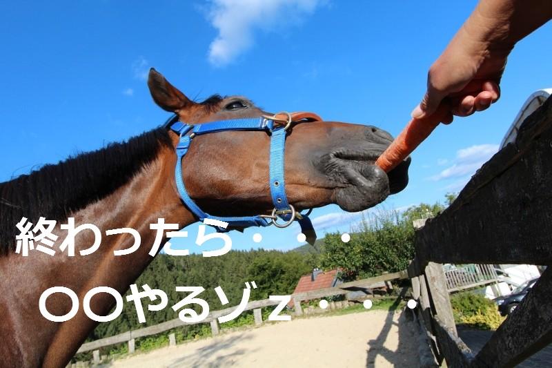 horse-281752_1280